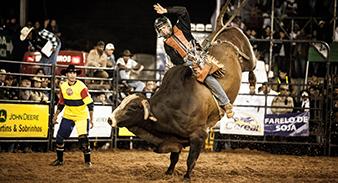 Rodeio em touros: desde 2012 evento é realizado de forma independente pelo Sindicato Rural (Foto: SRRV)